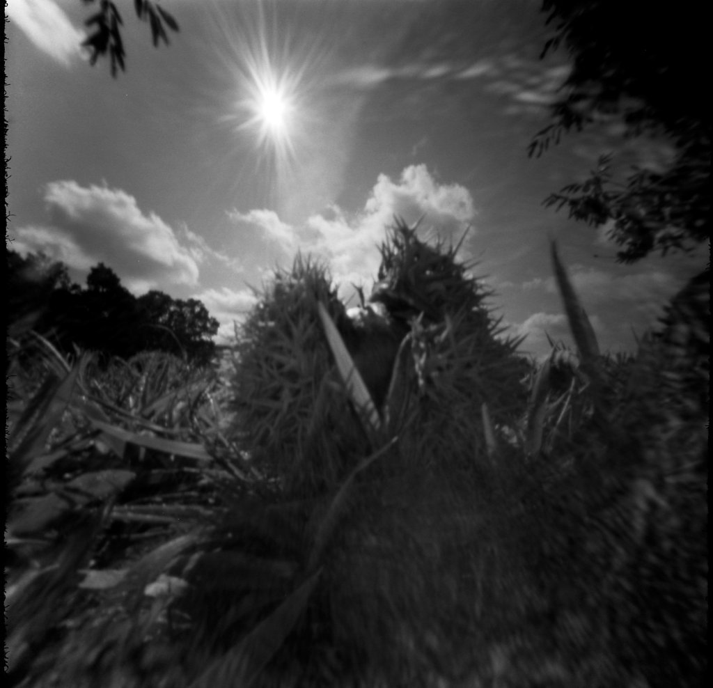 Chestnut in the Sun