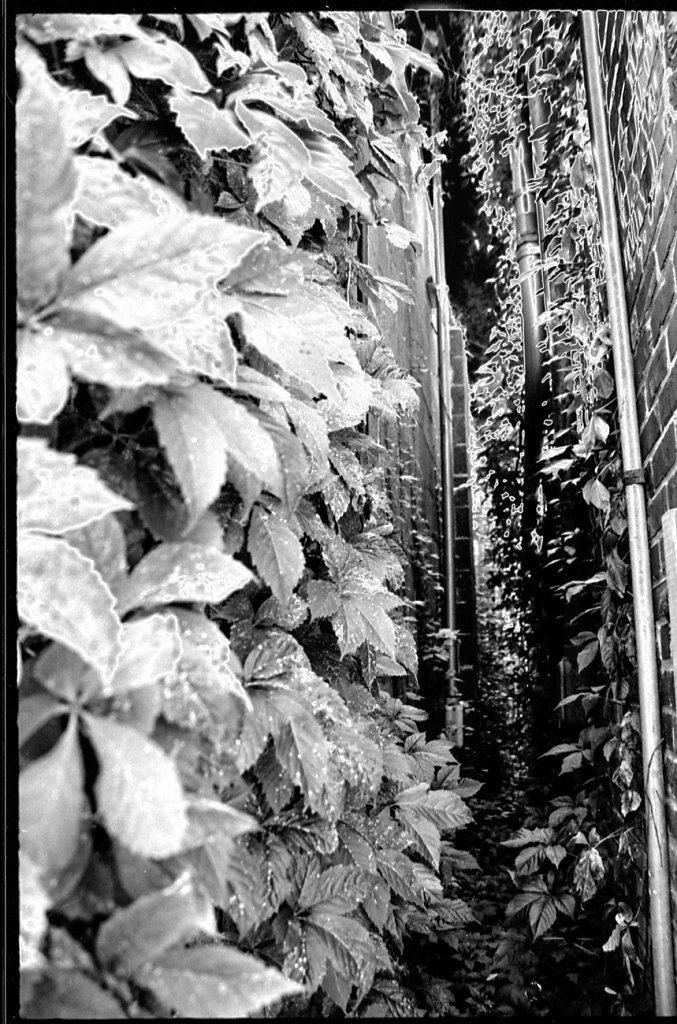 Alleyway of Leaves