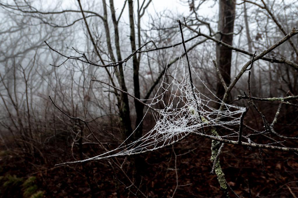 Thru-hike, the Cold Start (GA, NC)