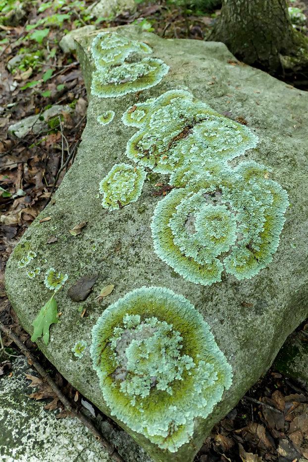 Lichen, PA